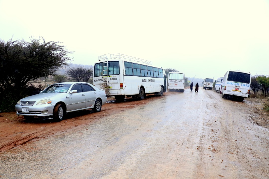 A fleet of amoud University owned vehicles including buses for students and smaller cars for staff at the main campus on a cold morning of   Sunday, January 12th, 2020. The vehicles ply the Amoud University-Goorgab bridge-Borama route transporting students and staff to and   from work every day because the main campus is located 5km East of Borama town.
